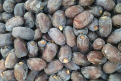 Sale of Kaloote dates